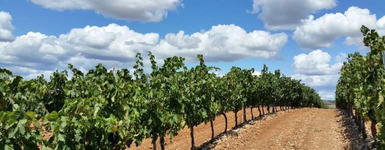 Consigue cita previa para consultar prestaciones en La Rioja en solo dos pasos.